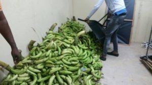 , Director de prodevaj dispone comida y apoyo ambulatorio por paso de matthews por Pedernales.