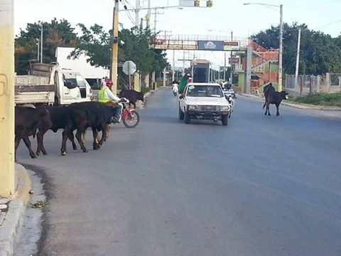 , Responsabilizan al Ayuntamiento Barahona de no hacer nada contra animales deambulantes
