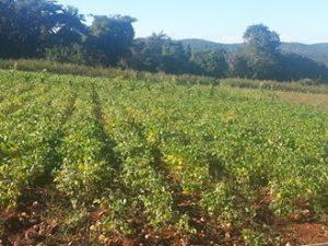 , Consorcio azucarero central de Barahona corta el agua utilizada por productores de la Guazara