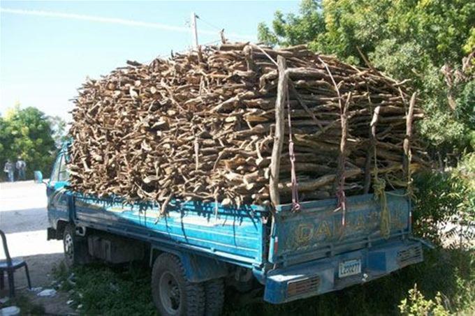 , Procesadoras de aromas causas de desforestación y contaminación en Cabral