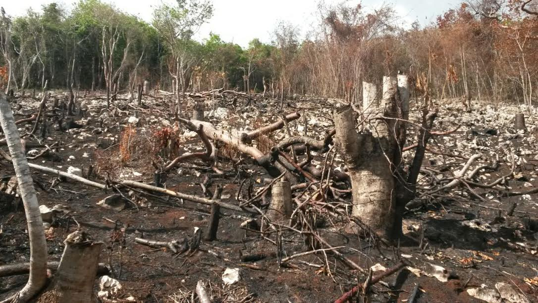 , Ambiente detiene a 7 nacionales Haitianos en paraje Santa Elena
