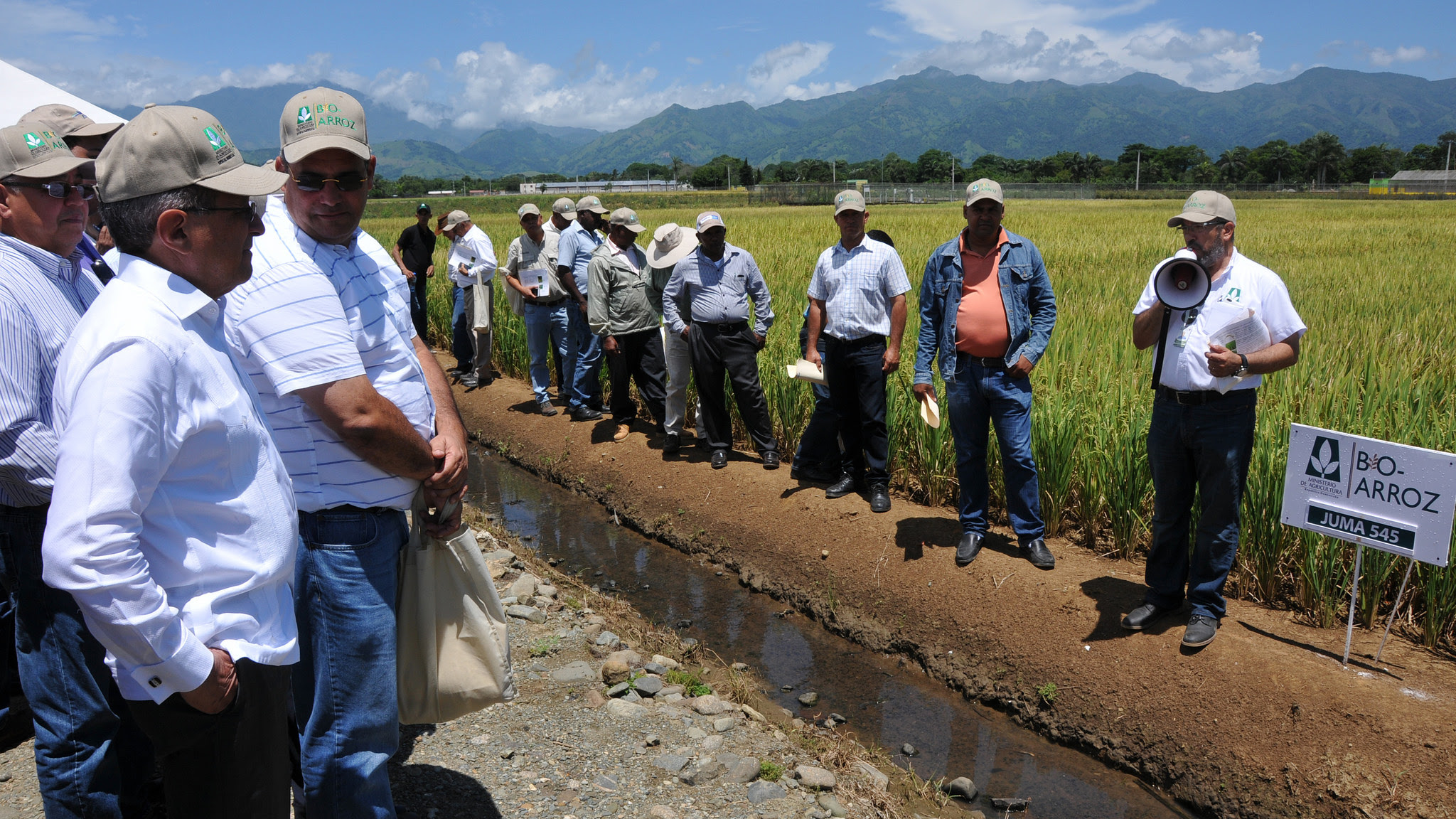 , Agricultura anuncia mejoramiento genético del arroz dominicano