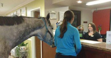 caballo1p