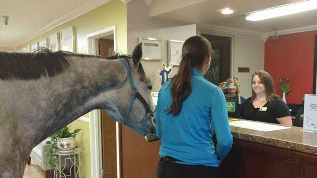 , Una mujer se aloja con su caballo en la habitación de un motel