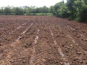 , Productores agrícolas  de La Victoria piden al Presidente pago de 16 millones de pesos y titulos definitivos