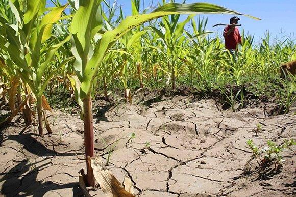 agricultura-sequia-cambio-climatico-medio-ambiente-580x387