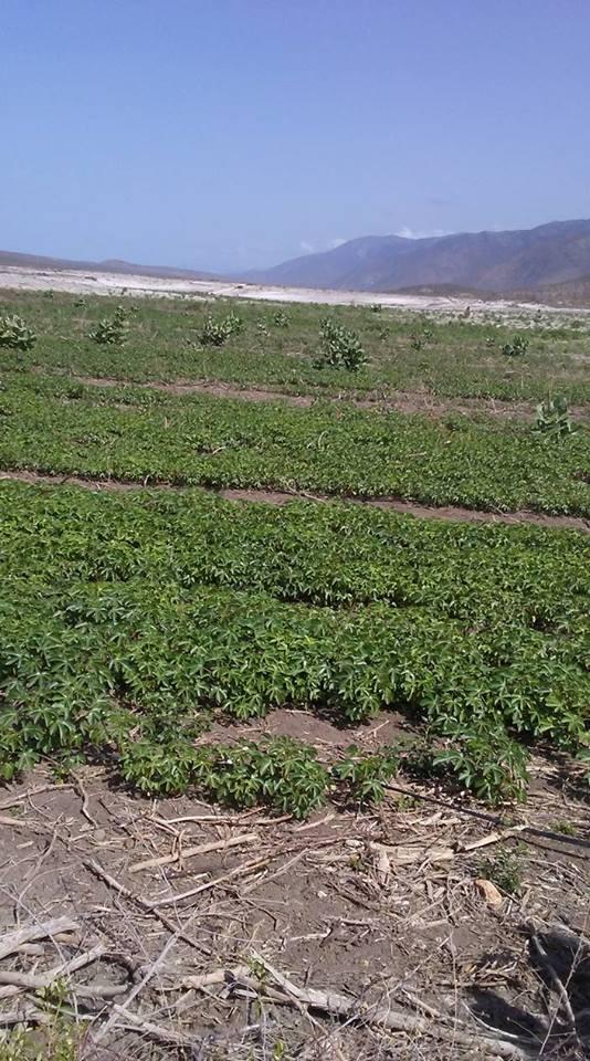 , Comunitarios de Boca de Cachõn deploran la situación de abandono de Proyecto Agrario Cerro Colorado
