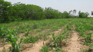 , Agricultores de los Saladillos piden ayuda para reconstruir sistema de regio por tuberías