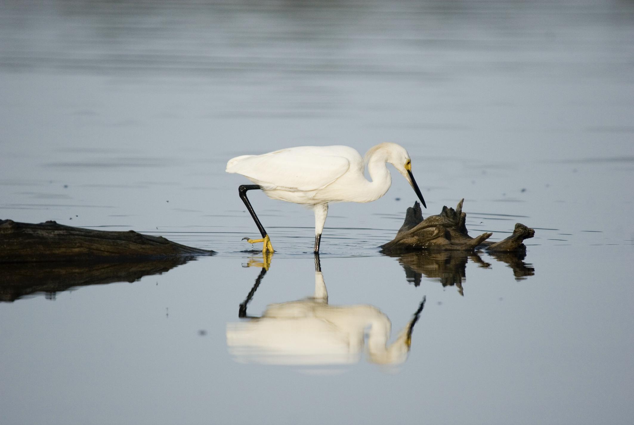 , CEMEX recibe nominación por Plan de Acción para la Biodiversidad Las Salinas y Laguna Cabral