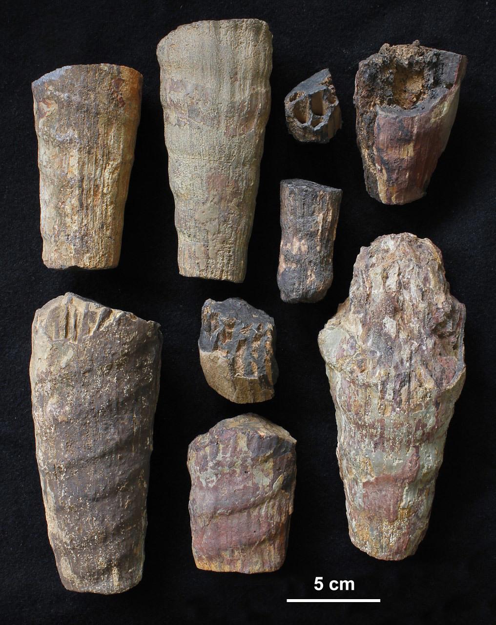 , Descubren un misterioso fósil marino de hace 465 millones de años