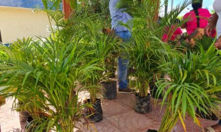 """Grupo """"Peñuela Avanza"""" recibe donativo de árboles por parte de la fundación """"Manuel López"""""""