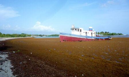 CAC agradece apoyo del pueblo Barahona en operativo limpieza de algas